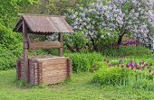 Wooden Well Against The Background Of Blooming Lilacs. Wooden Well In The Countryside. poster