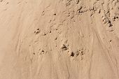 Sand Background,sand Texture With Lumps, Sand Background,sand Texture With Lumps poster