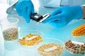 Researcher analyzing agricultural grains and legumes in the laboratory. GMO research of cereals. Tes poster