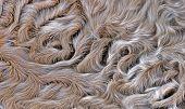 Lamb Fur Background