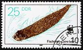 Postage Stamp Gdr 1987 Otter Swimming