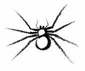 Sketched Spider