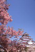 Aizuwakamatsu Castle And Cherry Blossom