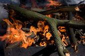 picture of brazier  - Thick dry broken tree branches burning in an iron brazier under sunlight closeup view - JPG