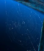 Spider Web On A Pier