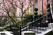 A Boston Garden