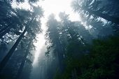 Deep Foggy Forest