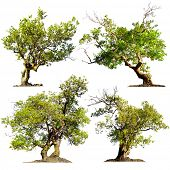 Trees isolated on white background. Green nature plants design elements