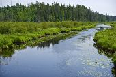 foto of wilder  - Minnesota Wilderness and Small River - JPG