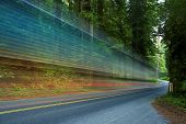 pic of redwood forest  - Forest Traffic  - JPG