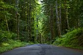 Road Through Deep Forest