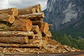 Wood Logs Stock Pile