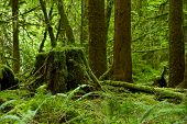 stock photo of canopy  - Rainforest Theme  - JPG