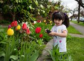 Young Girl Taking A Picture Of Tulips