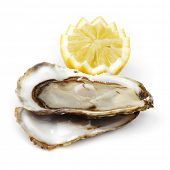 Oyster and lemon on white