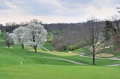Golf Course In Spring