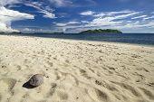 Coconut on beach with view of Tavua Island, Mamanuca Group, Fiji