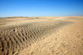 Dunes In Sahara