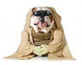 dog wisdom - english bulldog wearing munk costume isolated on white background