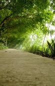 stock photo of tree lined street  - Street with green trees in the park - JPG