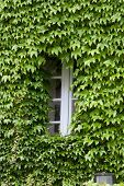 building covered with grapes vine. burgundy France