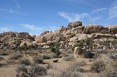 Joshua Tree National Park Desert Landscape