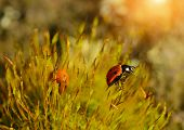 Ladybug In The Moss Forest