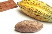 Cacao Fruit, Chocolate And Cocoa Bread