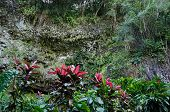 stock photo of grotto  - Beautiful ferns in the Fern Grotto of Kauai near the Waimea River - JPG