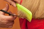 image of split ends  - Stylist cutting split ends, close up on scissors
