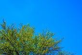 Trees And Blue Sky