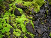 Fresh Wet Green Natural Moss