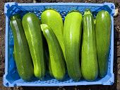 Tray Of Courgettes