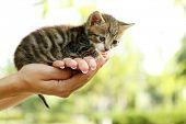 Cute little kitten in hands outdoors