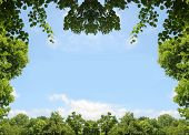 Natural Frame Of Green Leaves And Trees, Blue Sky With Clouds