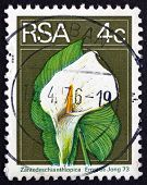 Postage Stamp South Africa 1974 Calla Lily, Flowering Plant