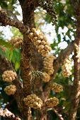 Wollongong fruit