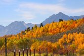 Colorful autumn trees in Grand Tetons national park