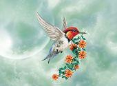 Fantastic hummingbird.