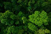 Rain forest from air near Kuranda, North Queensland, Australia