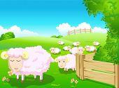 Sheep in Green Field