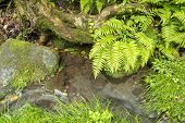 Small brook and plants