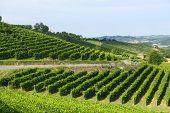Summer Landscape In Monferrato (italy)