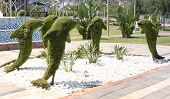 Topiary, dolphines