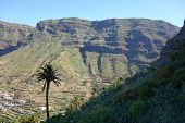 Palms In Valle Gran Rey