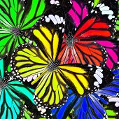 Mix Of Many Colorful Butterflies In To Greatb Background Patterns