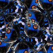 Pile Up Of Blue Pansy Butterfly In To The Greatest Of Blue Background Texture