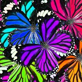 Purple And Mix Of Many Colorful Butterflies In To Great Background Patterns