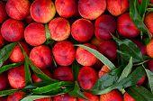 Fresh Peaches Background