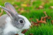 Rabbit Run On Grass